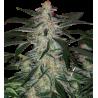 DEIMOS - 5ks - autoflowering