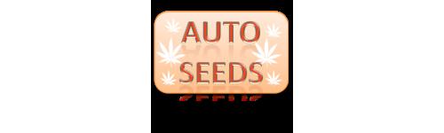 Autoflowering - samoknakvétací semena