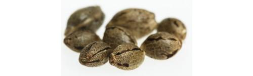 Mix semen marihuany