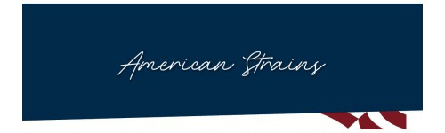 American Strains - feminizovaná semena